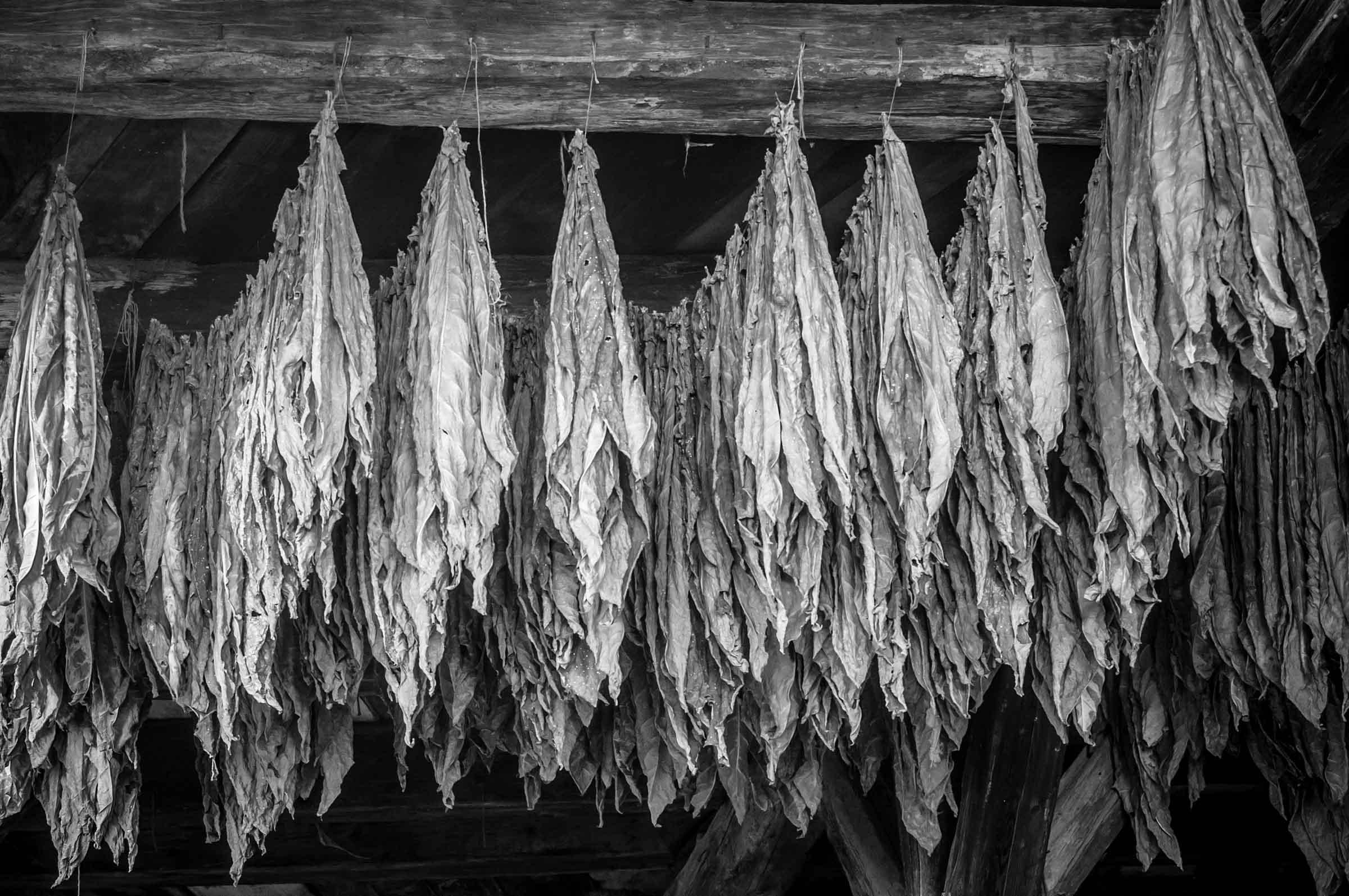 Zigarrendreher |Zigarrenformat | Zigarrenroller | Tabak | Deckblatt | Handgedreht |Havanna |Zigarre | Banderole | Umblatt | Event | Zigarrenmanufaktur |Buchen