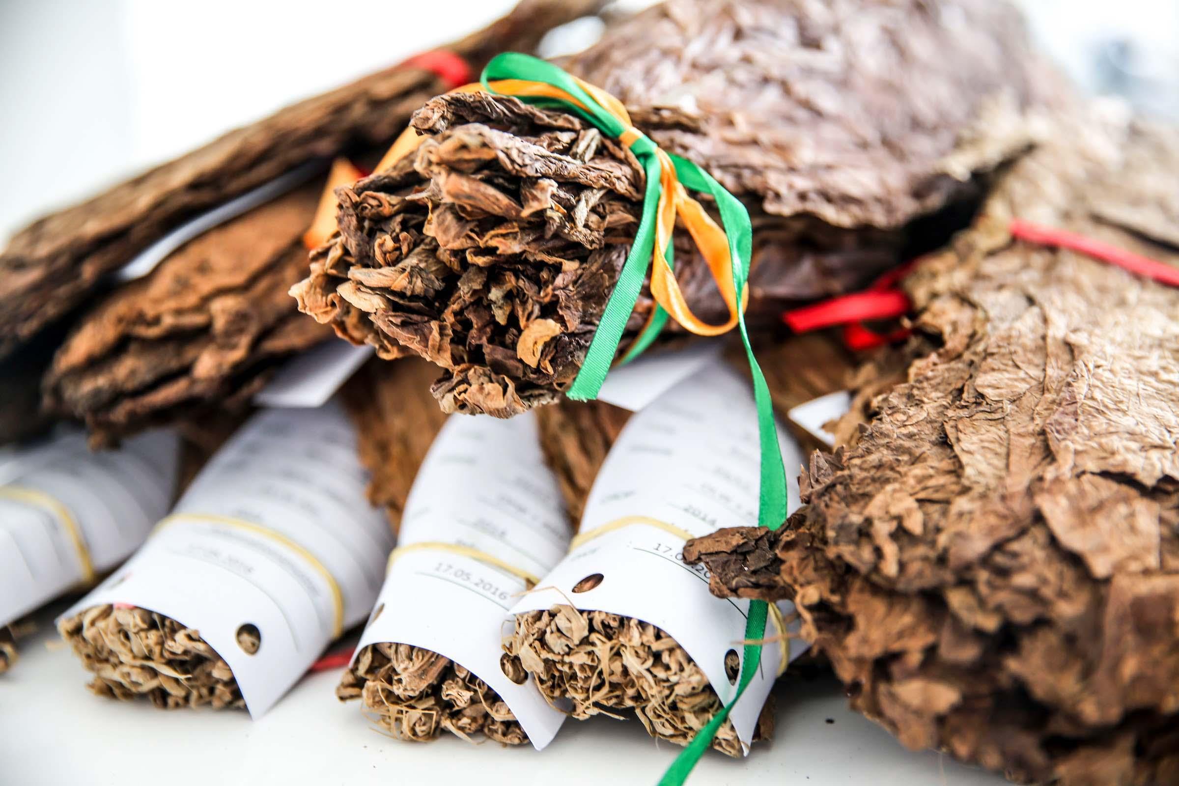 Zigarrenroller |Zigarrendreher | Zigarrenrollen | Zigarre | Trocadero | Buchen