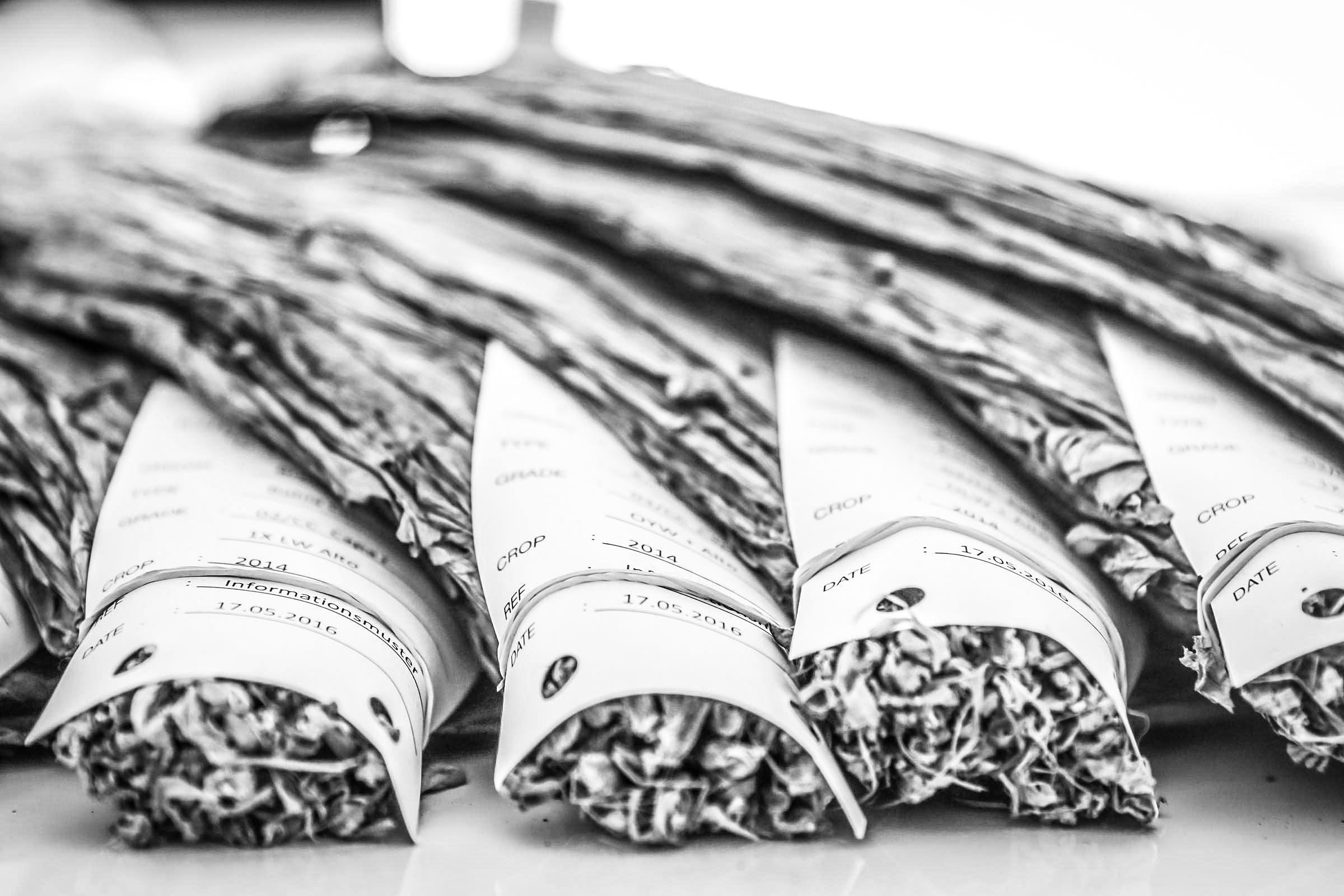 Zigarrenroller | Zigarrendreher | Zigarrenrollen | Zigarre | Trocadero |Buchen